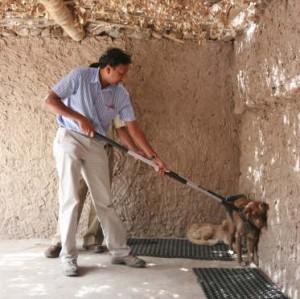 Cheap And Humane Dog Neutering In Kitchener Waterloo
